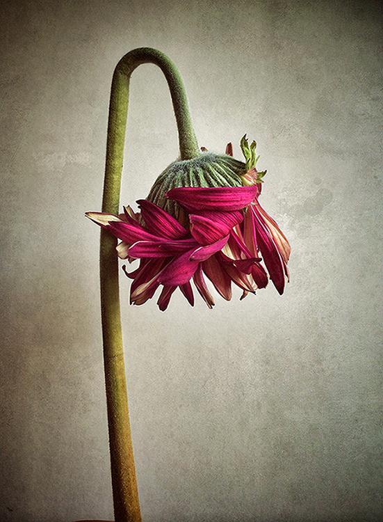 Dead flower series