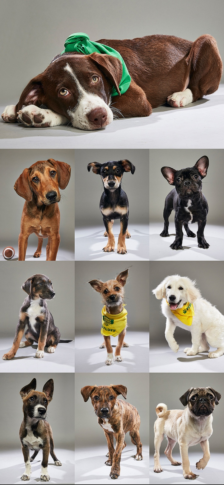 PuppyBowl-Collage